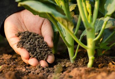 Granular Fertilizer